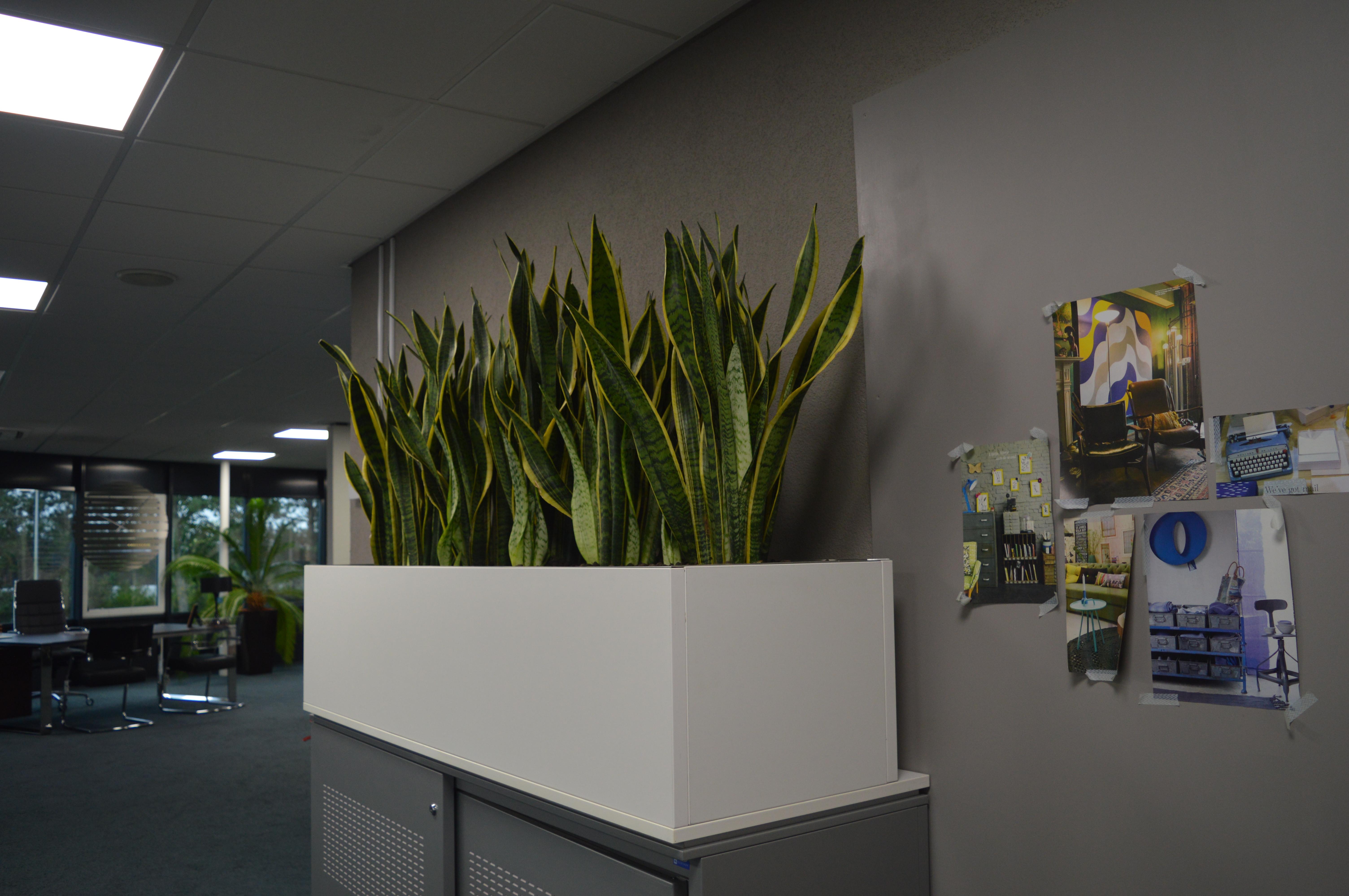 Opzet Plantenbak 160 X 45 Cm Bmi Kantoormeubelen