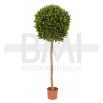 Kunstplant Buxus op stam
