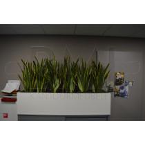 Opzet plantenbak 160 x 45 cm